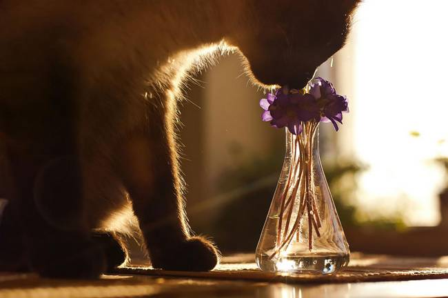 animais-cheirando-flores-4
