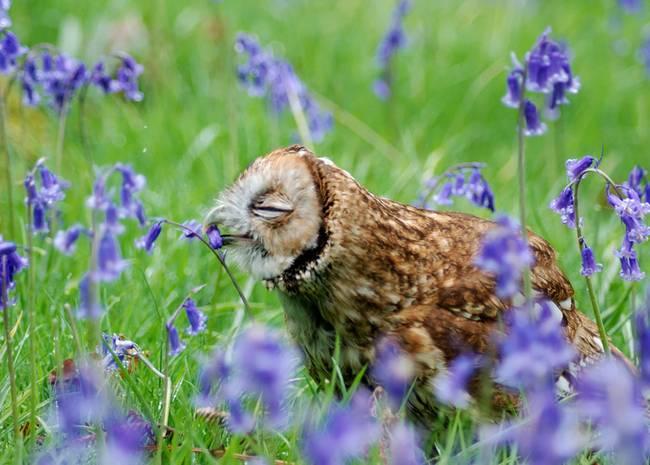 animais-cheirando-flores-5