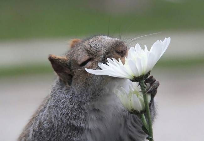 animais-cheirando-flores-9