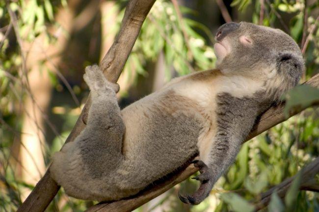 animais-dormem-demais-1