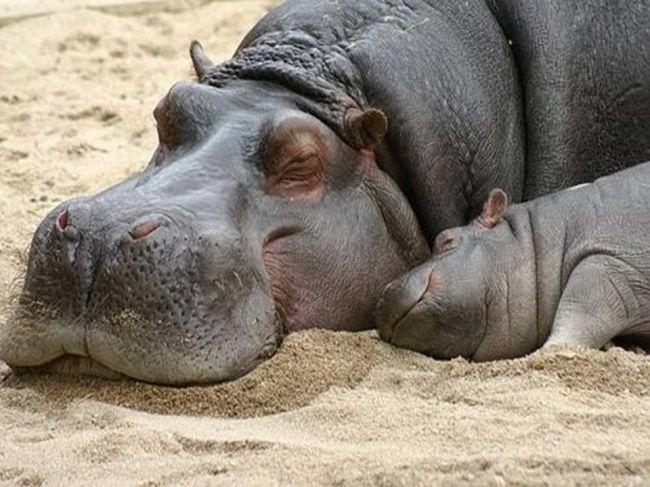 animais-dormem-demais-3