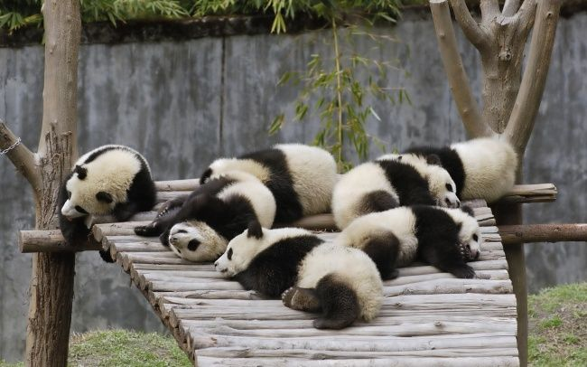 animais-dormem-demais-7