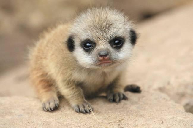 animais-recem-nascidos-1