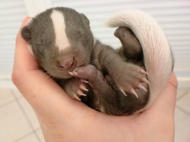 animais-recem-nascidos-10