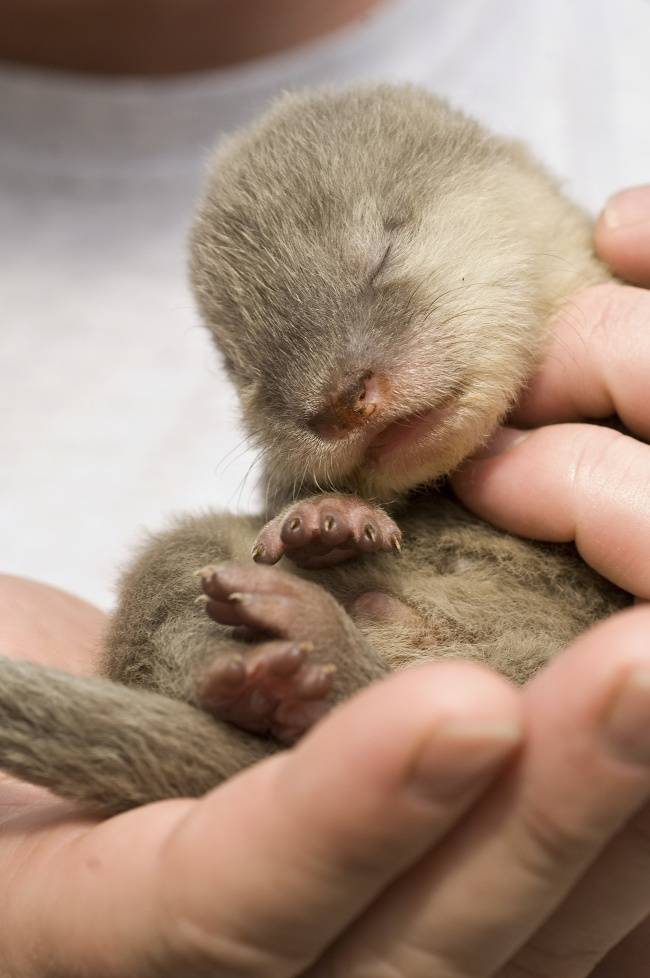 animais-recem-nascidos-11