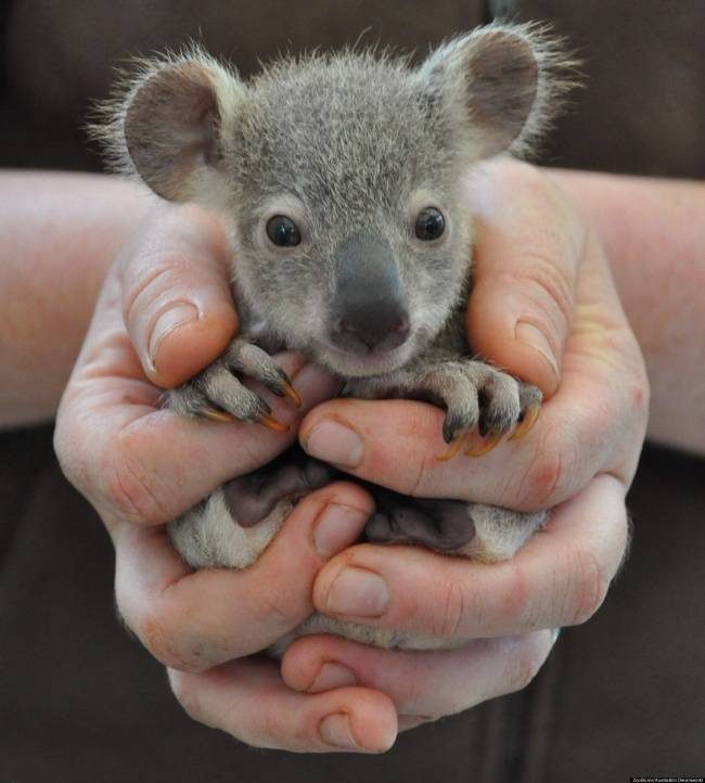animais-recem-nascidos-12