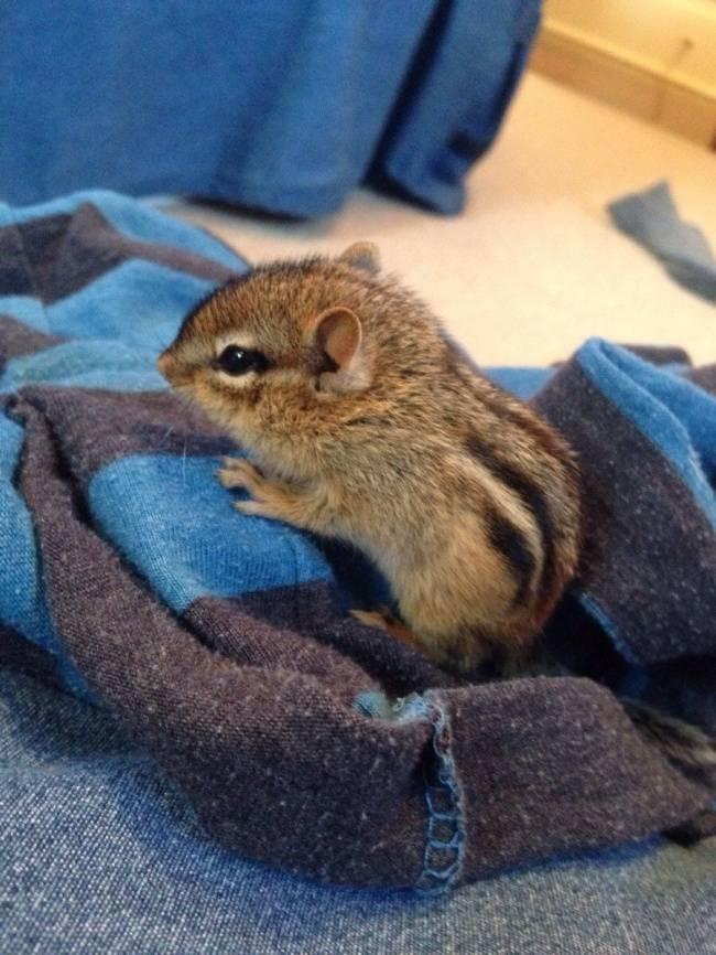 animais-recem-nascidos-15