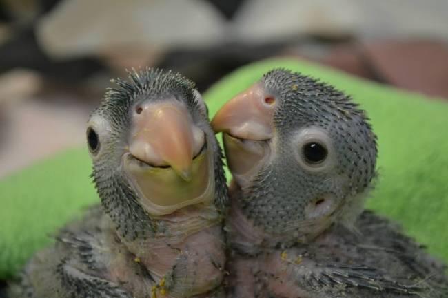 animais-recem-nascidos-5
