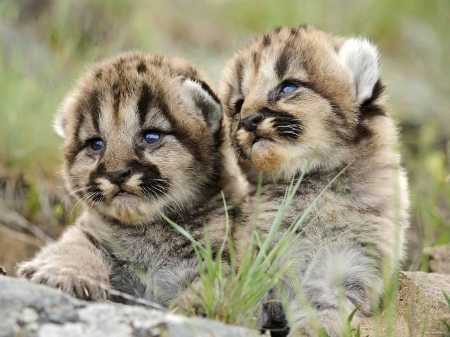 animais-recem-nascidos-7