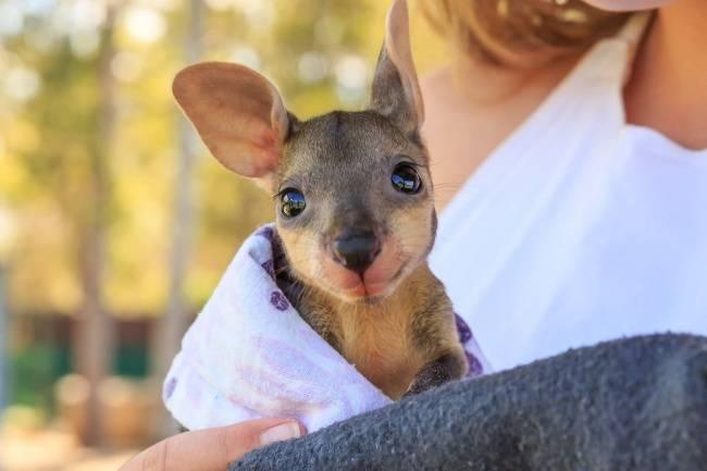 animais-recem-nascidos-8