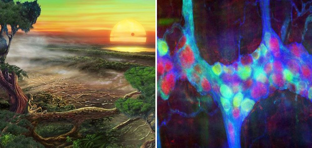 10 Fatos curiosos – e até mesmo bizarros – sobre o espaço