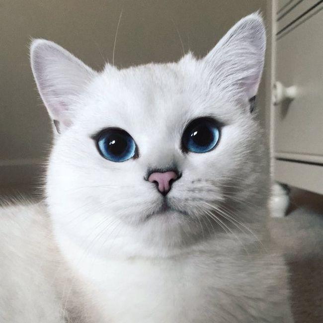 gato-com-delineador-3