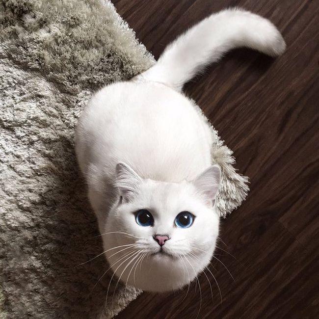gato-com-delineador-4