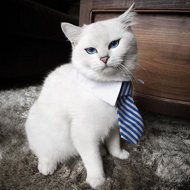gato-com-delineador-5