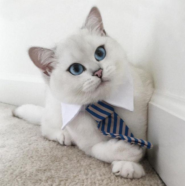 gato-com-delineador-6