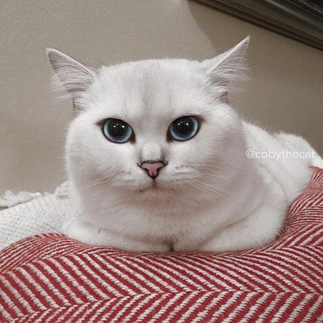 gato-com-delineador-7