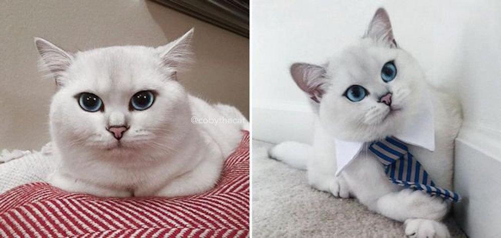 gato-olho-delineado_dest