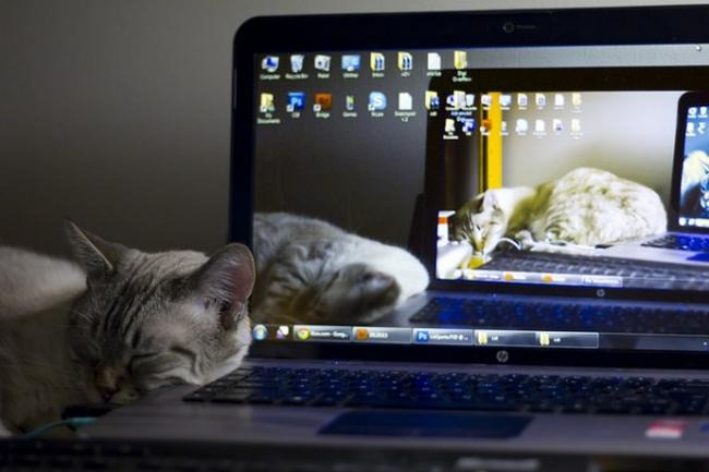Travesseiro-Gato-11