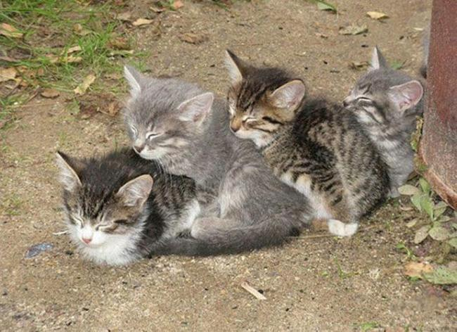 Travesseiro-Gato-13