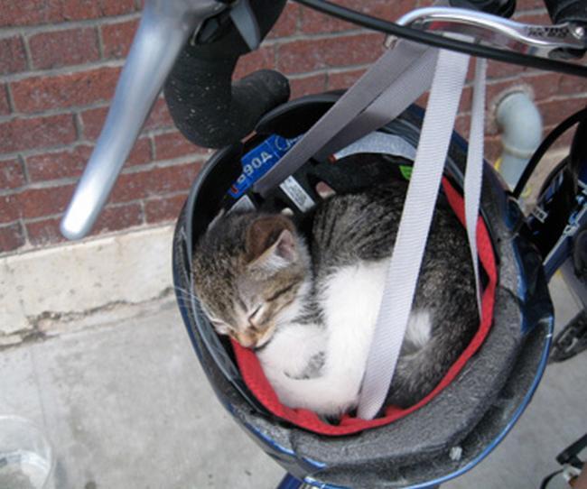 Travesseiro-Gato-14