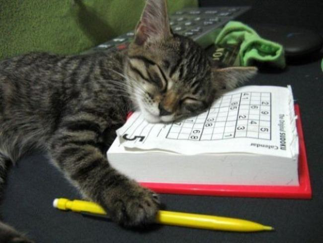 Travesseiro-Gato-16