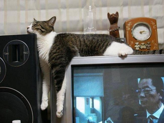 Travesseiro-Gato-19