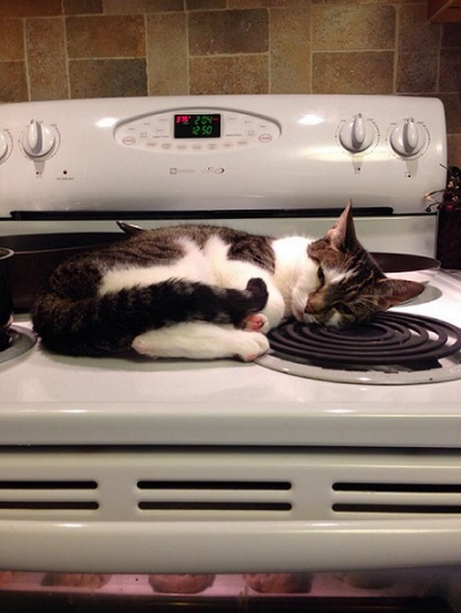 Travesseiro-Gato-20