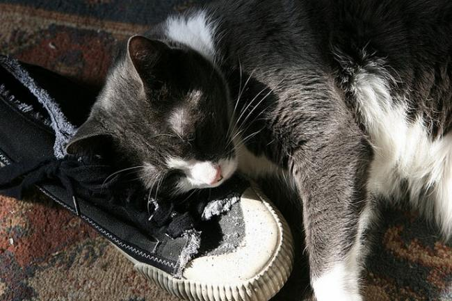 Travesseiro-Gato-3
