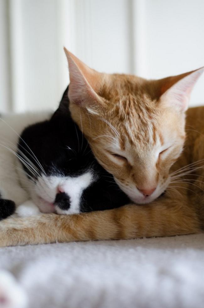 Travesseiro-Gato-4