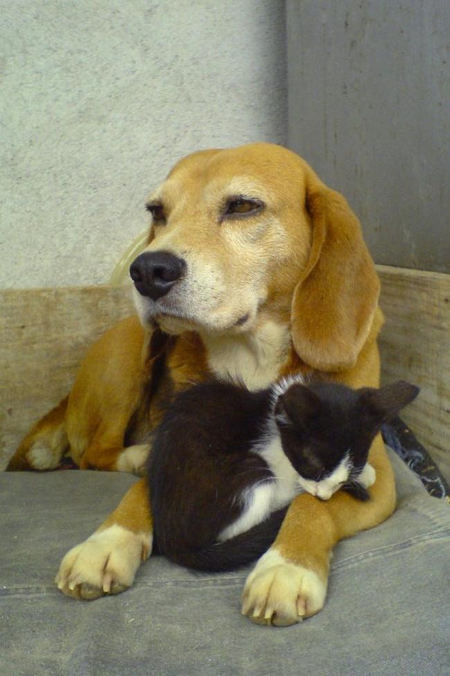 Travesseiro-Gato-5