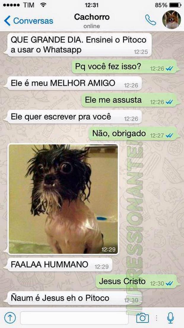 cachorro-whatsapp-20