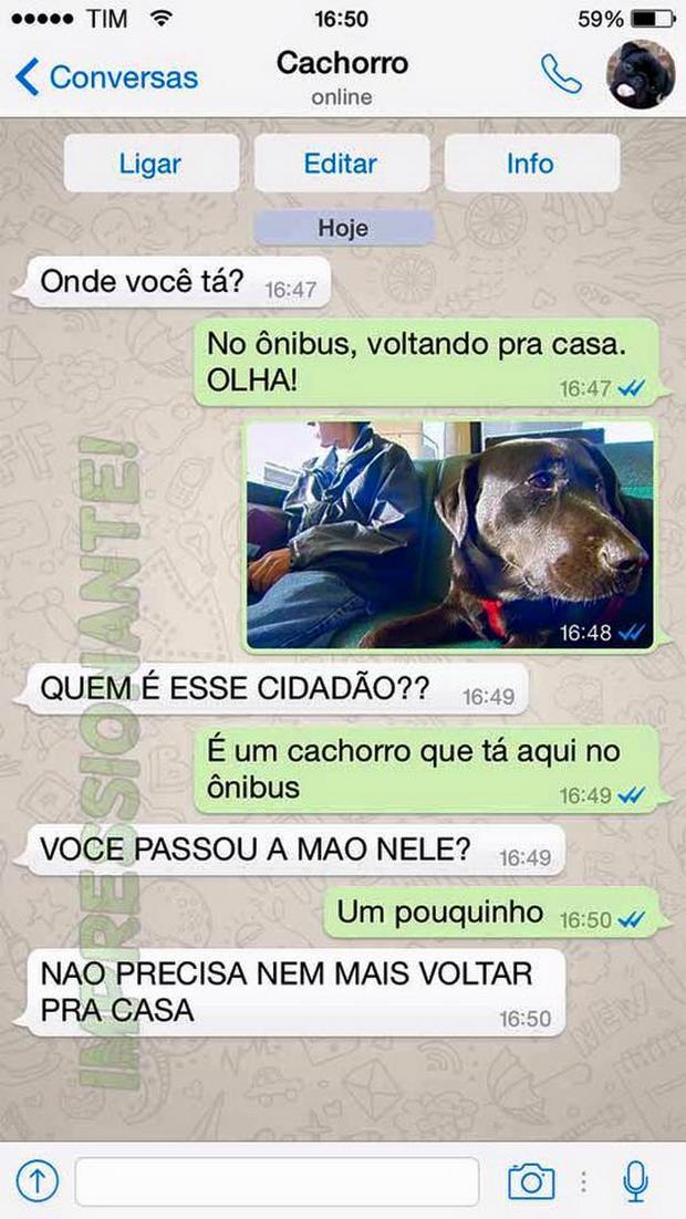 cachorro-whatsapp-21