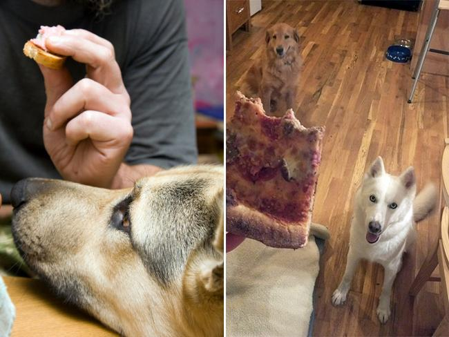 cachorros-pidoes-lanche-11
