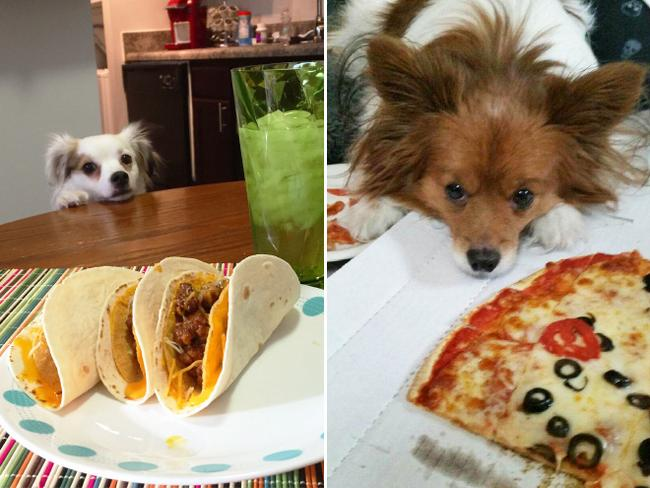 cachorros-pidoes-lanche-13