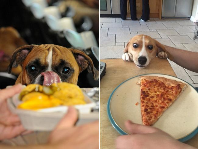 cachorros-pidoes-lanche-4