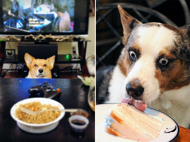 cachorros-pidoes-lanche-7