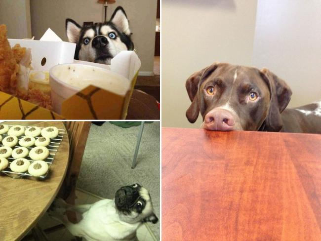 cachorros-pidoes-lanche-9