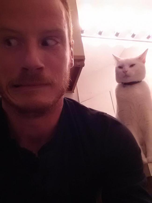gatos-trabalho-12