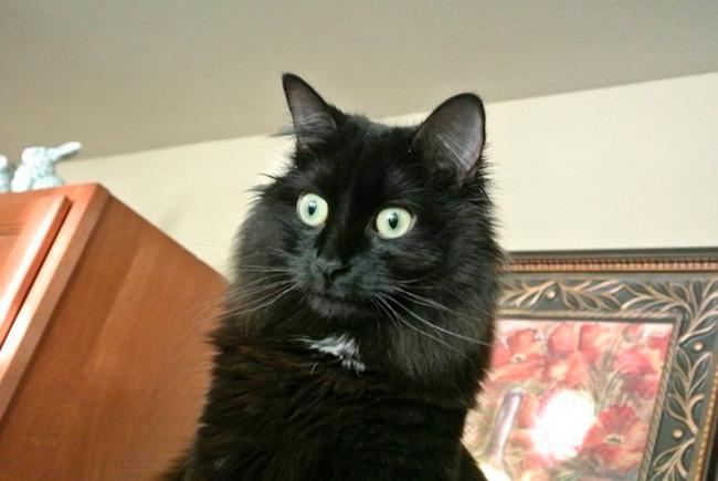 gatos-trabalho-15