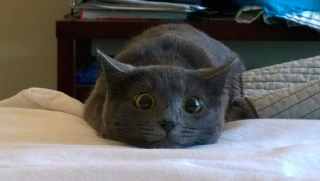 gatos-trabalho-16