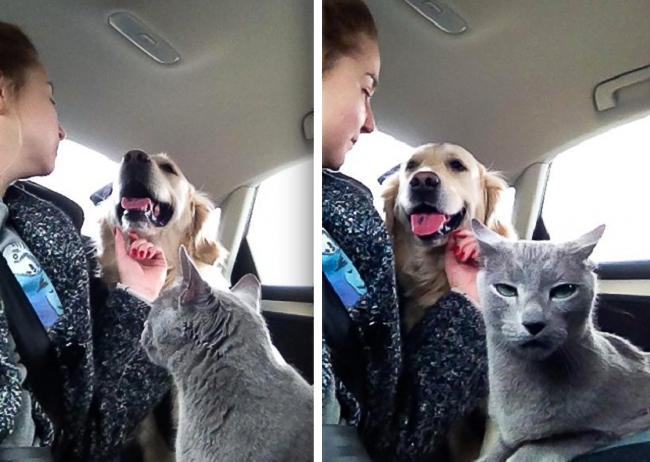 gatos-trabalho-2