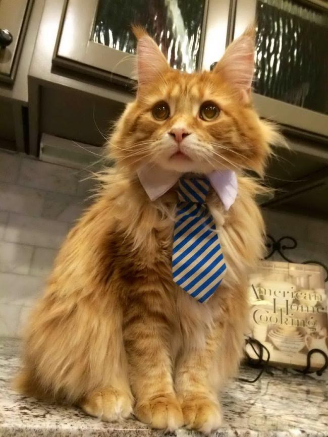 gatos-trabalho-6