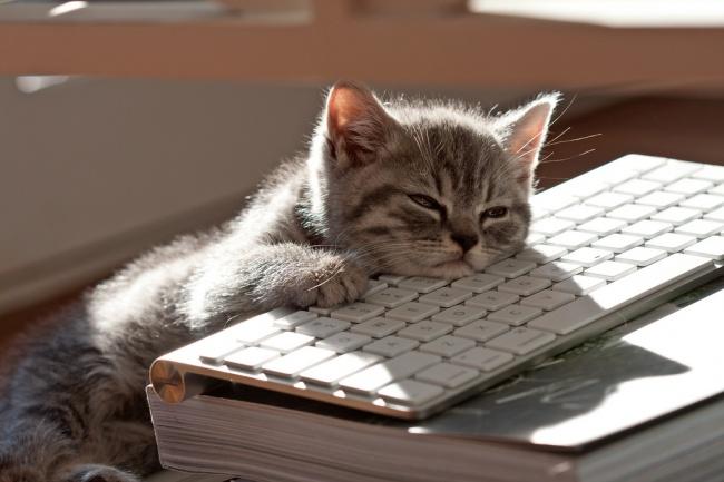 gatos-trabalho-8