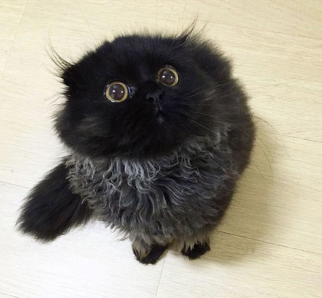 201602: Conheça Gimmo , O Gato Com Olhos De Coruja