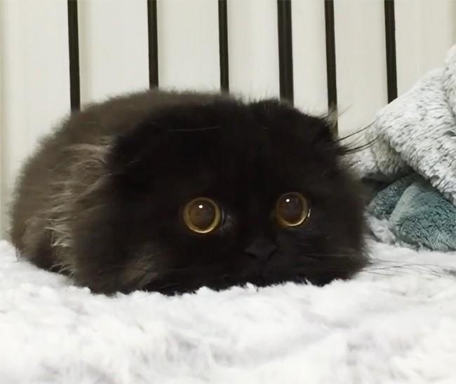 gimmo-gato-2