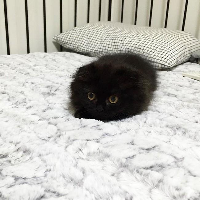 gimmo-gato-7