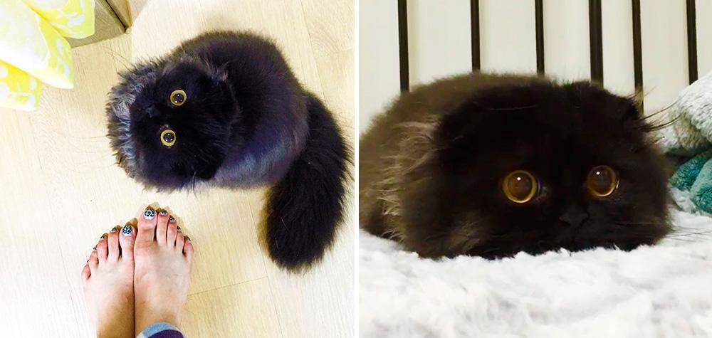 gimmo-gato