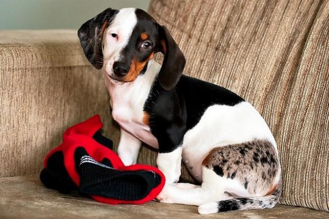 Cachorro-Pelagem-Diferente-1