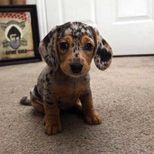 Cachorro-Pelagem-Diferente-10