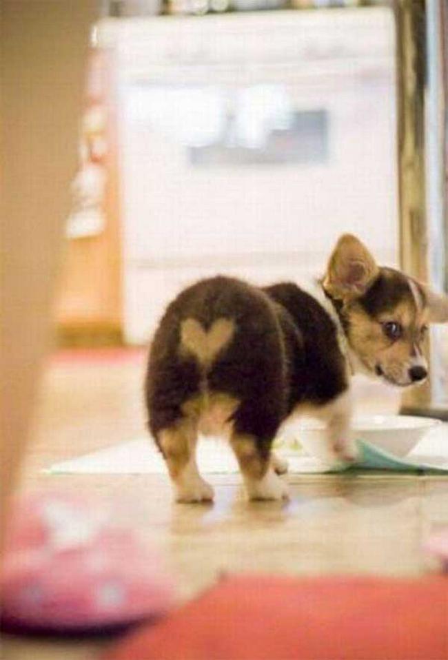 Cachorro-Pelagem-Diferente-17
